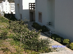 Rear of Apartment from Car Parking Space