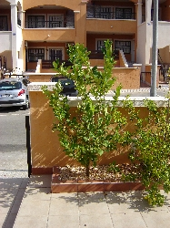 Front of garden with car space opposite