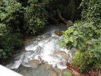 Cranbrook Rain Forest