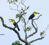 Toucans at the resort