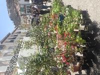 Huescar market