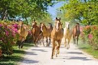 Horses passing villa