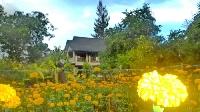 lower gardens & our chicken & duck farm