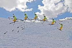 Skiing in Roccaraso