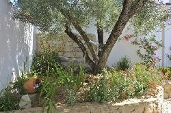 Olive tree near BBQ