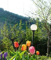 Garden of Le Galelle