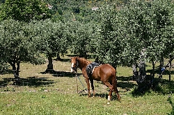 horseriding on Anita or Aster