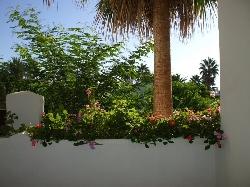 Terrace Planter & view