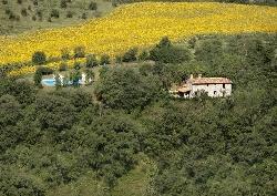 The villa, pool, olive grove, sunflowers