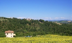 Villa with sunflowers,pool,view of Todi